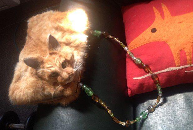 На новозеландском аукционе выставили клатч из кошки