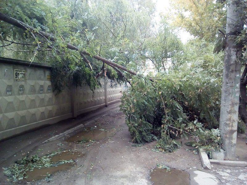 В Кировском районе Волгограда два дерева упали на припаркованные во дворе автомобили
