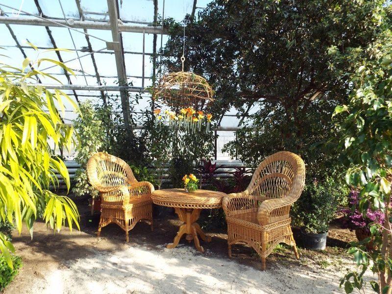 Ботанический сад откроет сезон бесплатных экскурсий в оранжерею