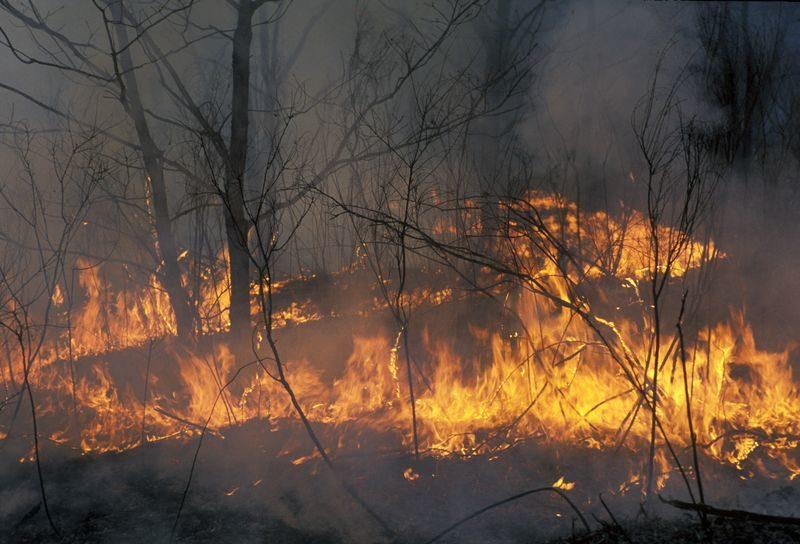 МЧС предупредило о высокой пожароопасности в Волгоградской области