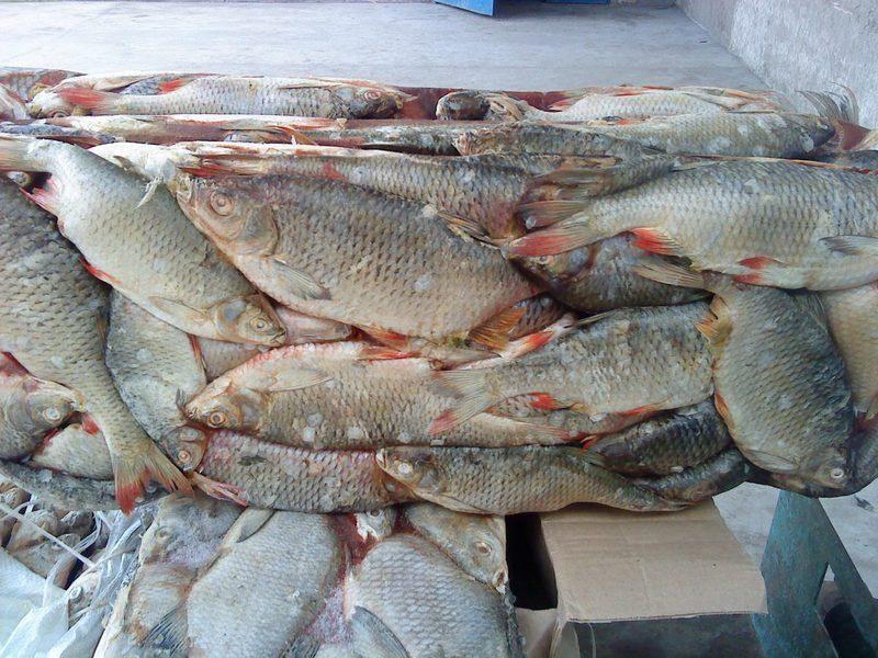 Астраханские пограничники не пропустили более 20 тонн рыбы из Казахстана