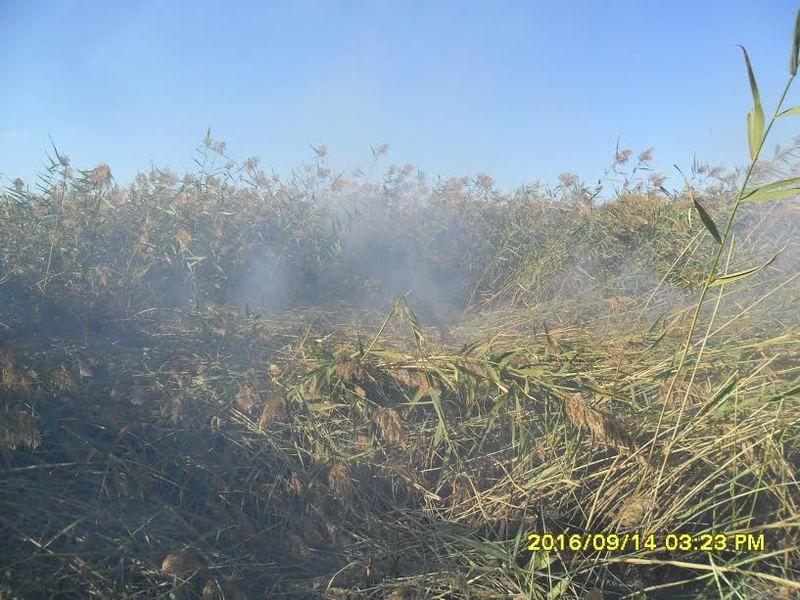 Экологи нашли причину нериятного запаха на юге Волгограда