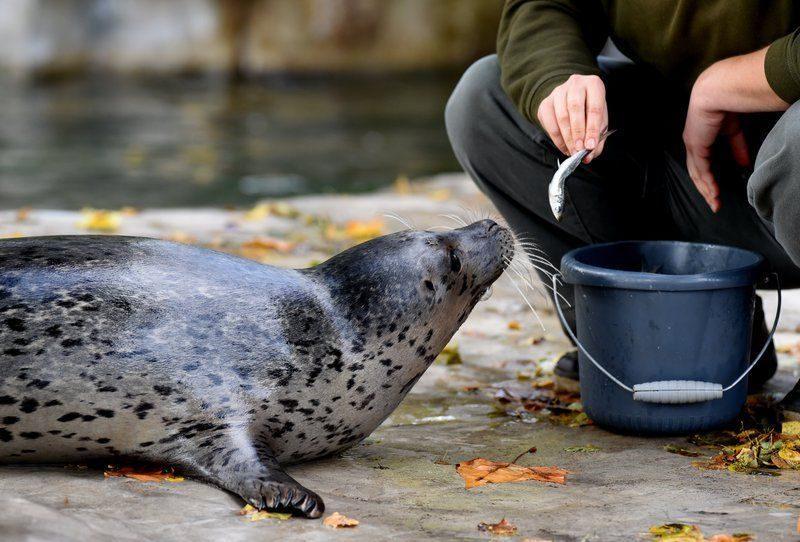 В волгоградский океанариум переедут сахалинские тюлени