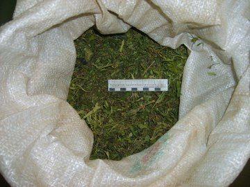 Житель Котовского района выращивал марихуану у себя в доме
