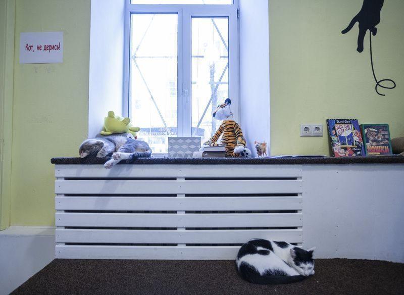В Москве к кофе подают котов