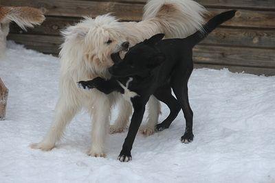 Мэрии порекомендовали заняться отловом собак