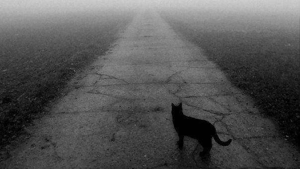 Казанские сатанисты убили черную кошку во время обряда