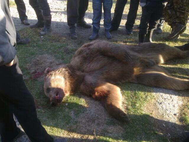 В Бурятии медведь растерзал грибников