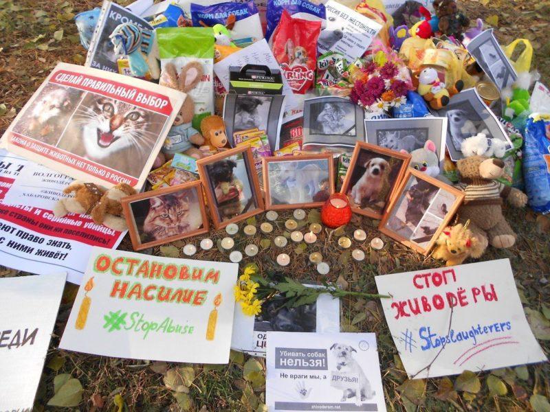 «Россия без жестокости»: меняем закон, закрываем цирки, создаем зоополицию