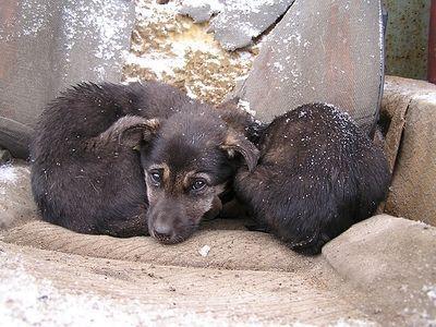 В России может появиться зоо-омбудсмен
