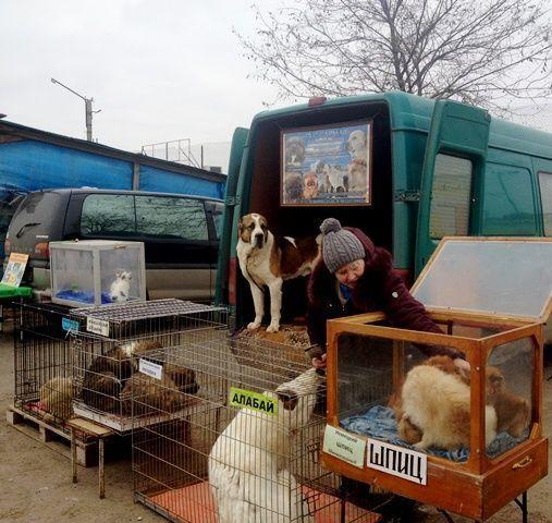 """В Волгограде ликвидировали два """"блошиных"""" рынка"""
