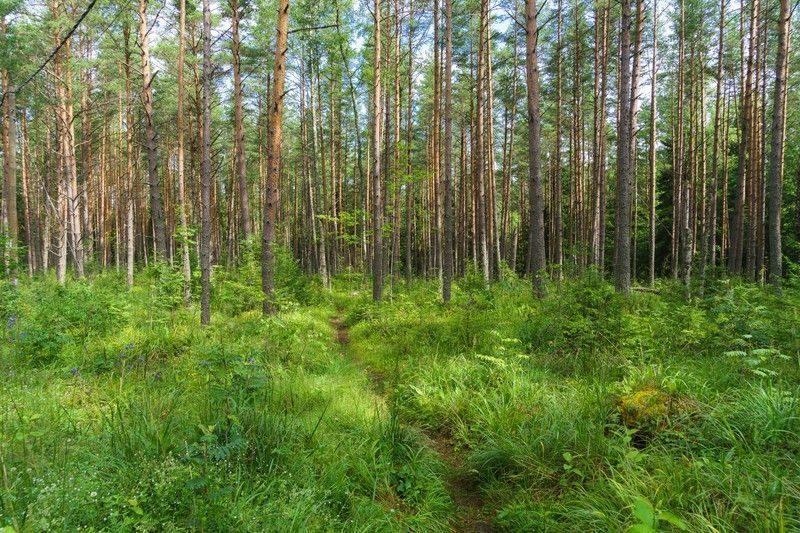 Участнику многомилионного мошенничества с Кировским лесом вынесли приговор
