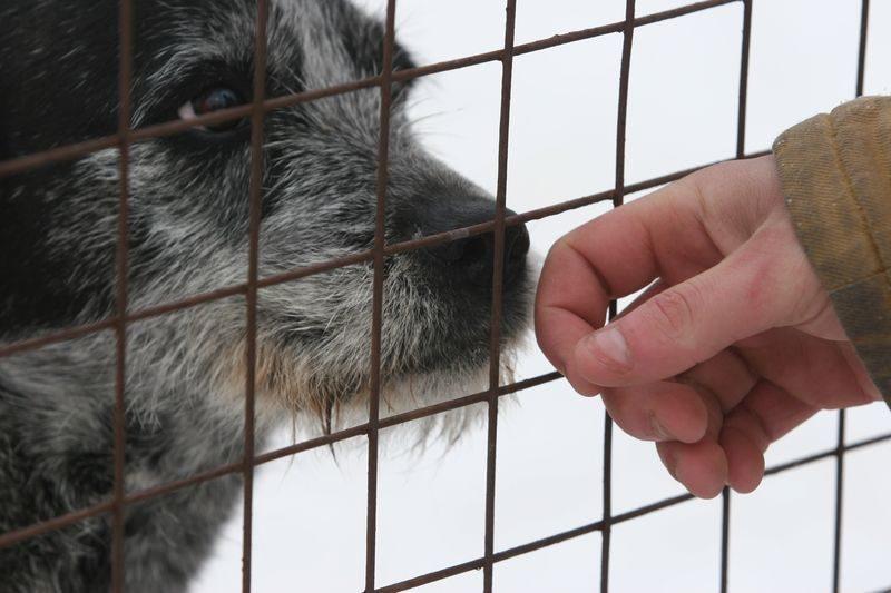 В России у животных могут появится права и Уполномоченный по их защите