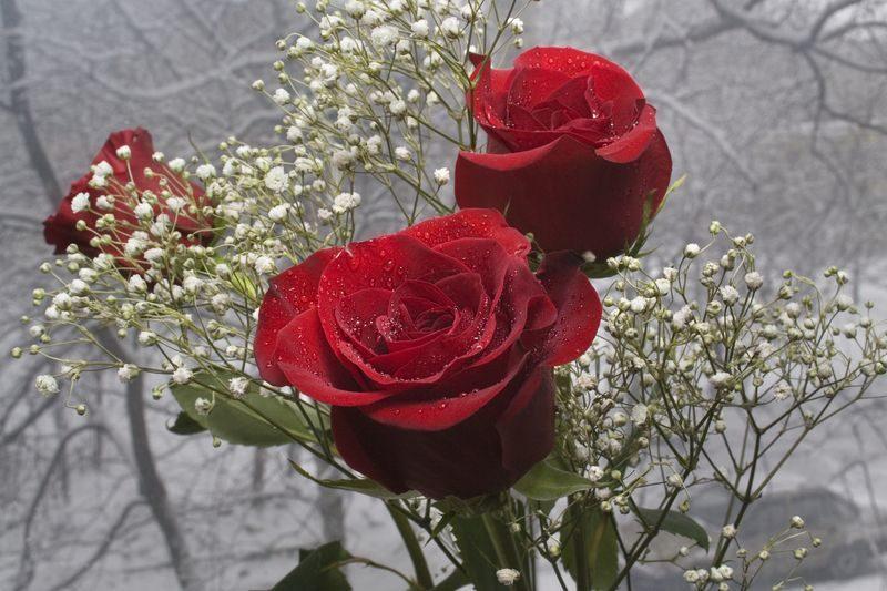 Аппарат губернатора закупит цветы почти на 250 тысяч рублей