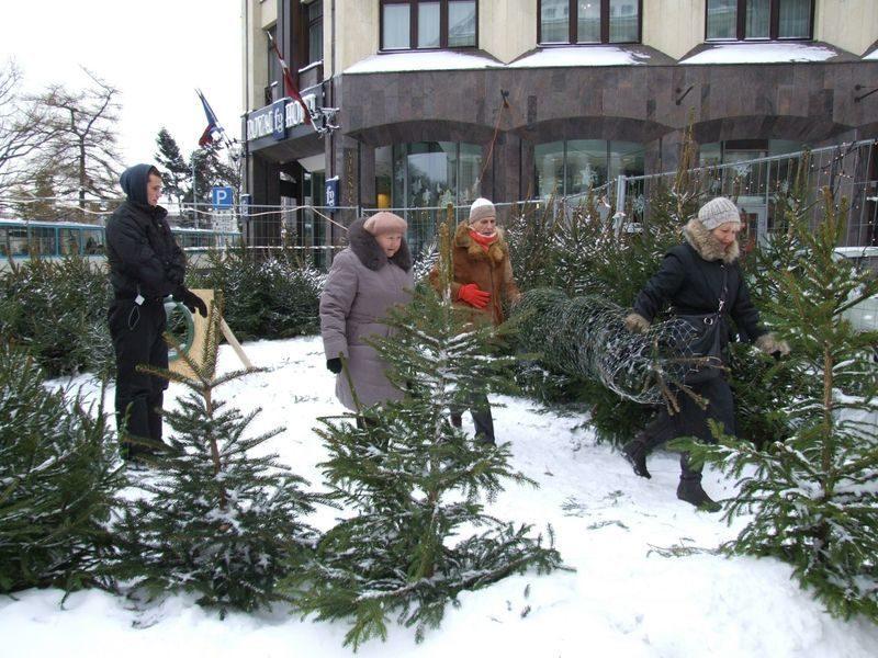 В Волгоградской области задержали продавца нелегальных елок