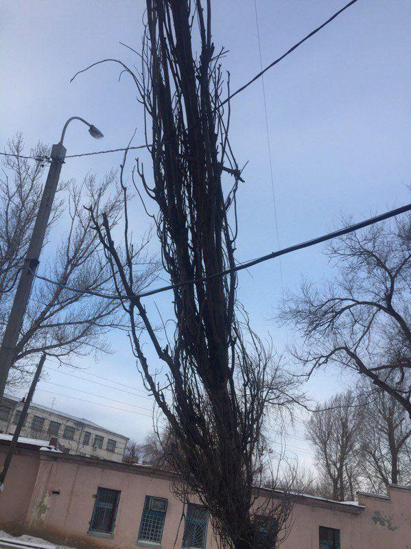 В Волгограде сильный ветер повалил дерево на жилой дом