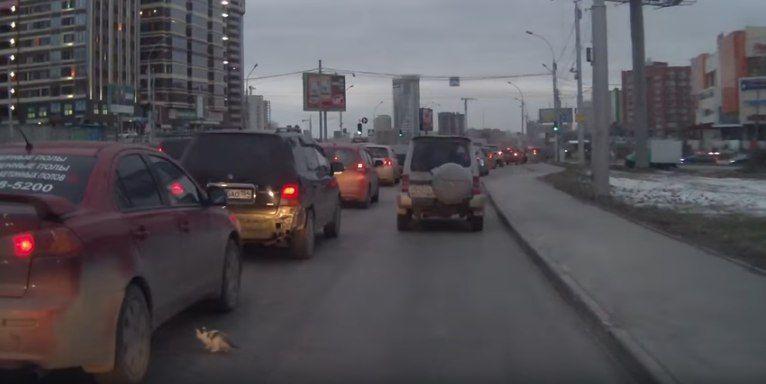 В Новосибирске мужчина спас котенка из-под колес автомобиля. ВИДЕО