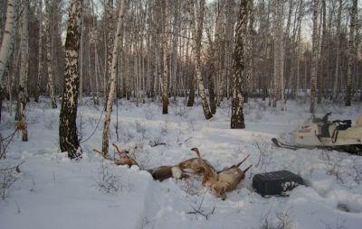 Волгоградский браконьер настрелял на 260 тысяч рублей