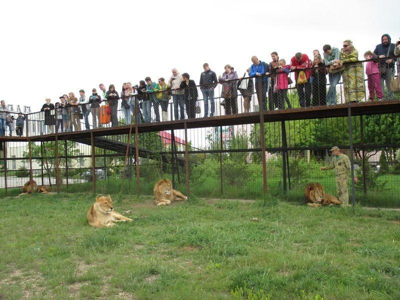 На территории крымского парка львов нашли труп мужчины