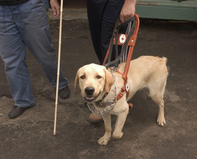 Владельцы собак-поводырей получат на их содержание 22 тысячи рублей