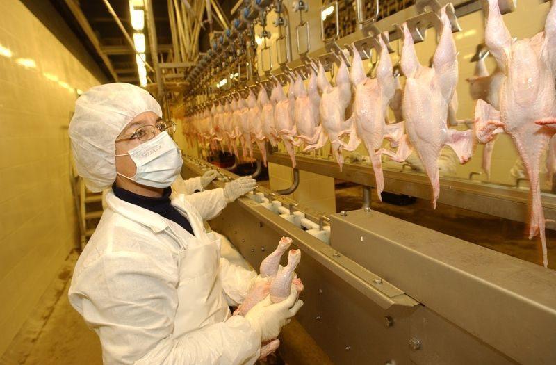 В ЮФО разыгрался птичий грипп