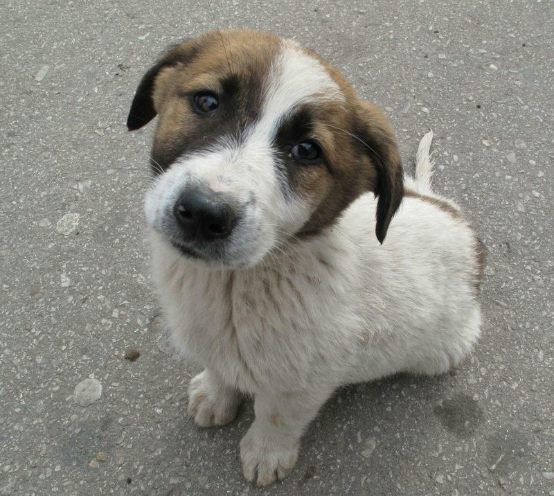 Собака спасла жизнь брошенному матерью ребёнку