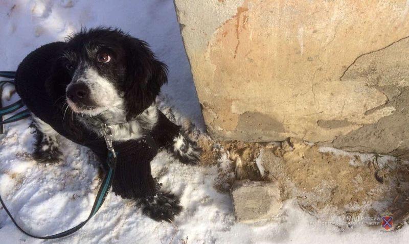 У жителя Фроловского района служебная собака в холодильнике нашла полкило марихуаны