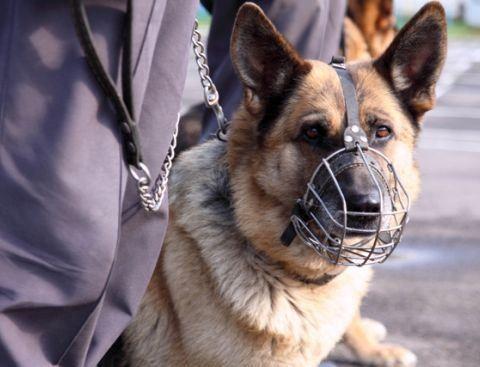 Под Волгоградом у пассажира рейсового автобуса служебная собака нашла наркотики