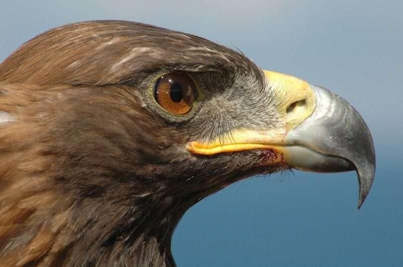 В Волгограде закрыли сайты по продаже краснокнижных птиц