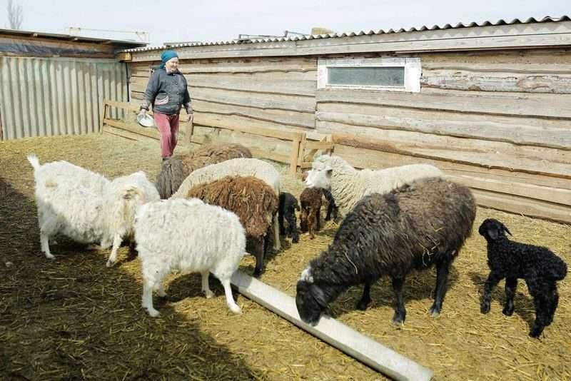 В Волгоградской области сельское хозяйство переходит на электронный формат