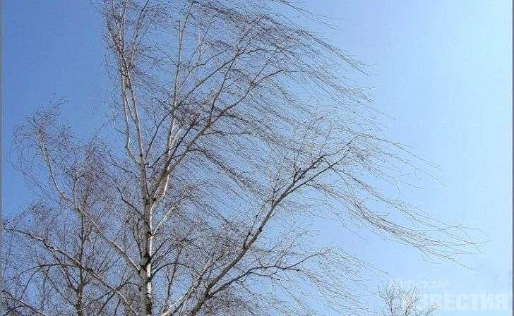 На выходных в Волгограде будет ветрено