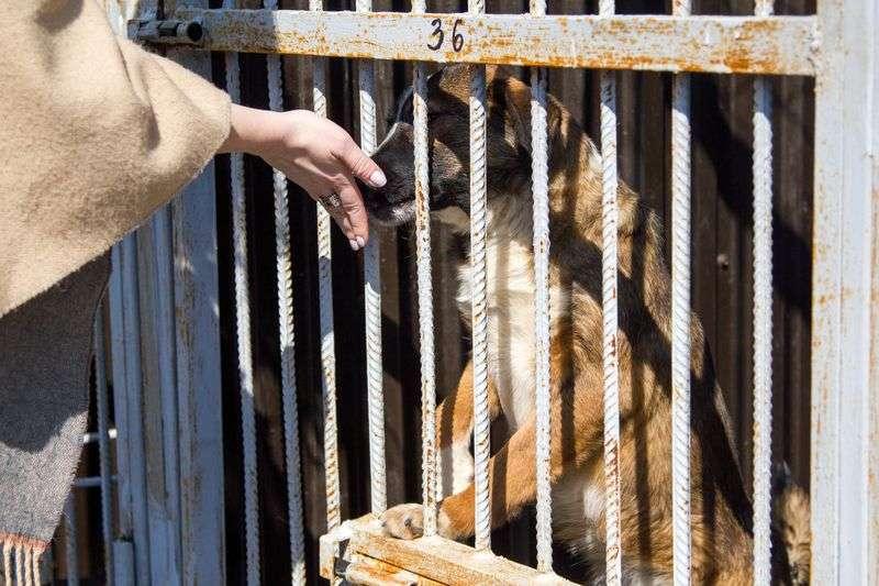 Московские зоозащитники привезли в Дагестан гуманитарную помощь