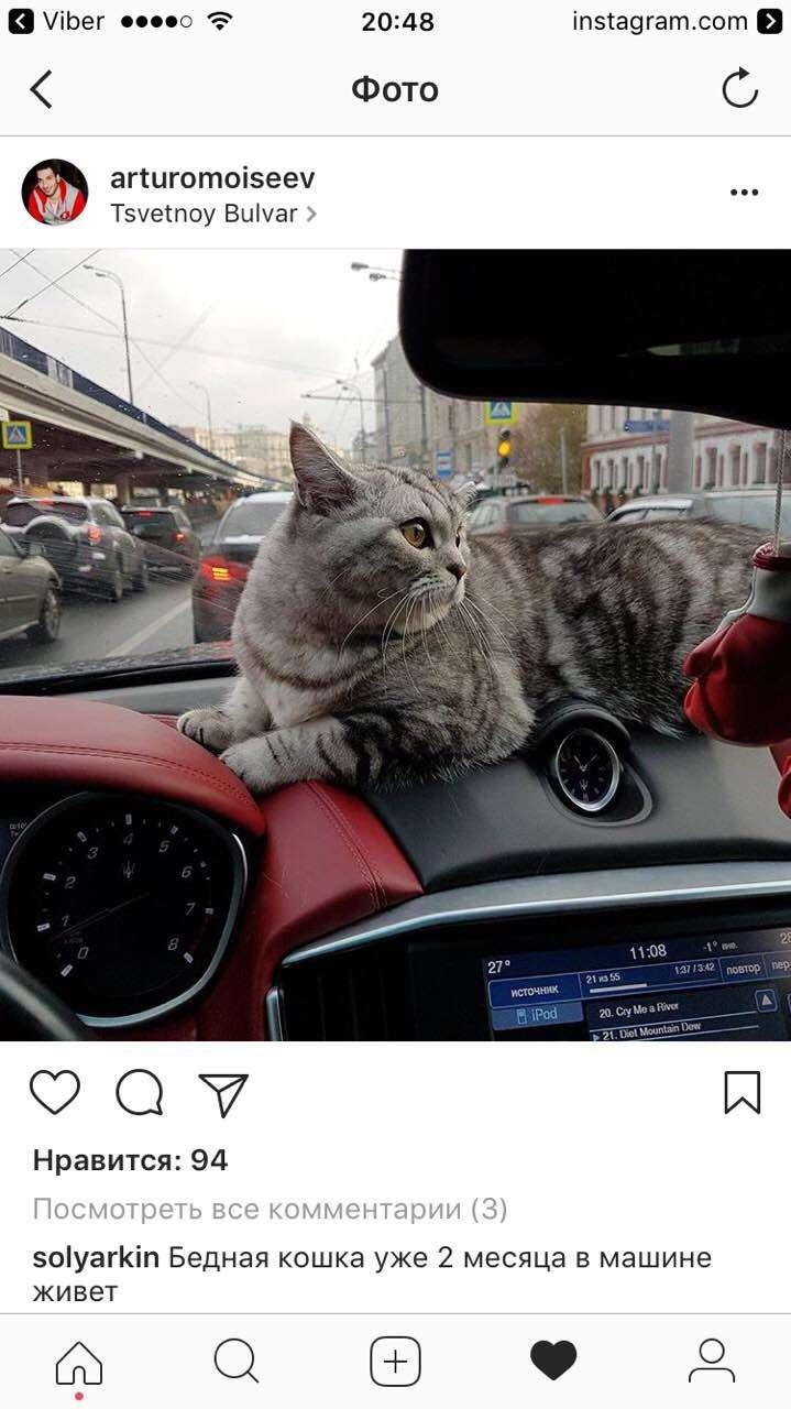 кот на мазератти