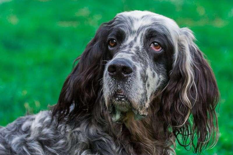 Антология законотворчества: об ответственном обращении с животными