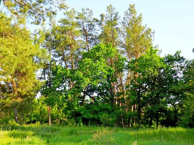Волгоградские леса обрабатывают от «врагов народа»