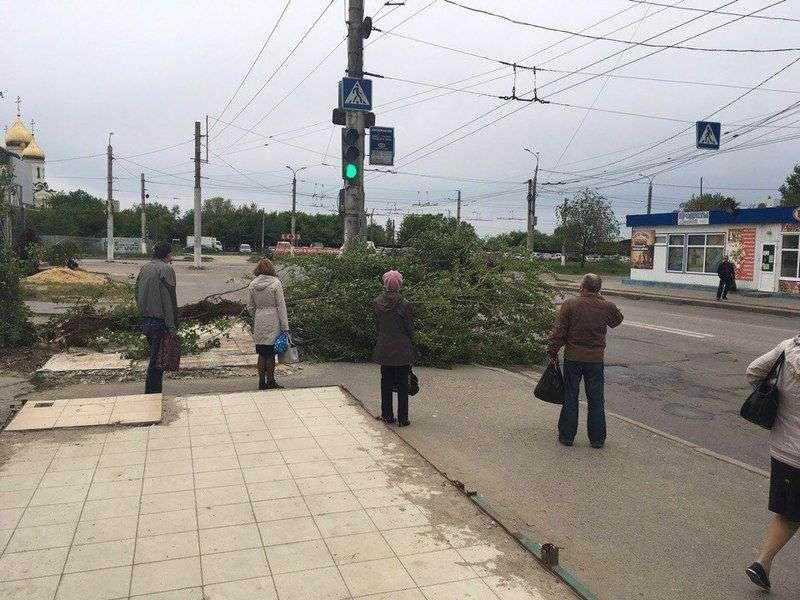 В Дзержинском районе ветер повалил дерево на проезжую часть
