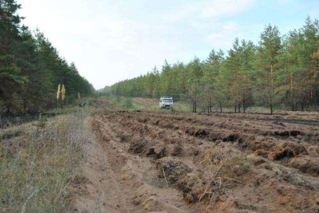 В волгоградских лесах начались противопожарные мероприятия