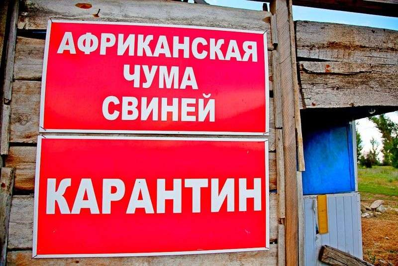 В Волгоградской области обнаружен очаг АЧС