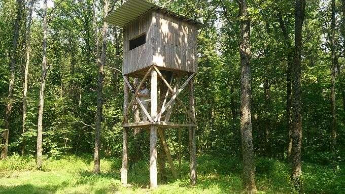 В Волгоградской области открыли охоту на кабанов