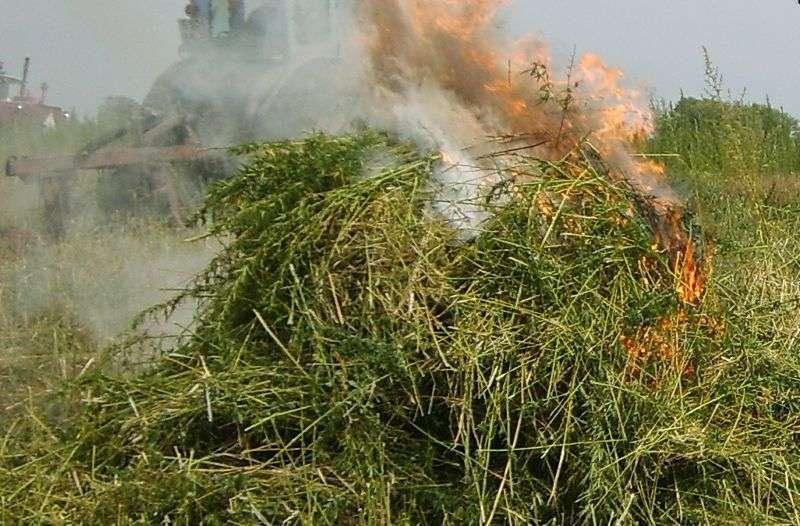 В Волгоградской области нашли 15 соток дикорастущего мака