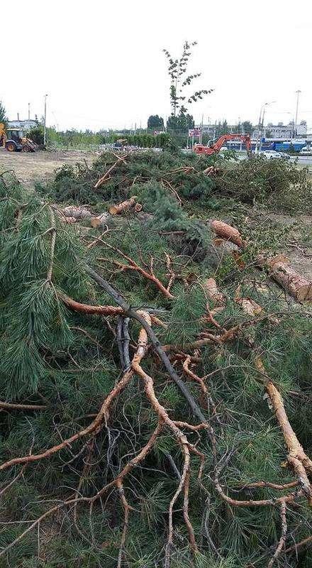 В Волгограде вырубили парк «Сталинградских вдов»