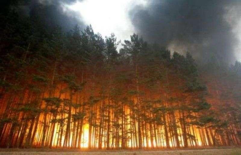 МЧС предупреждает о сильной пожароопасности в регионе