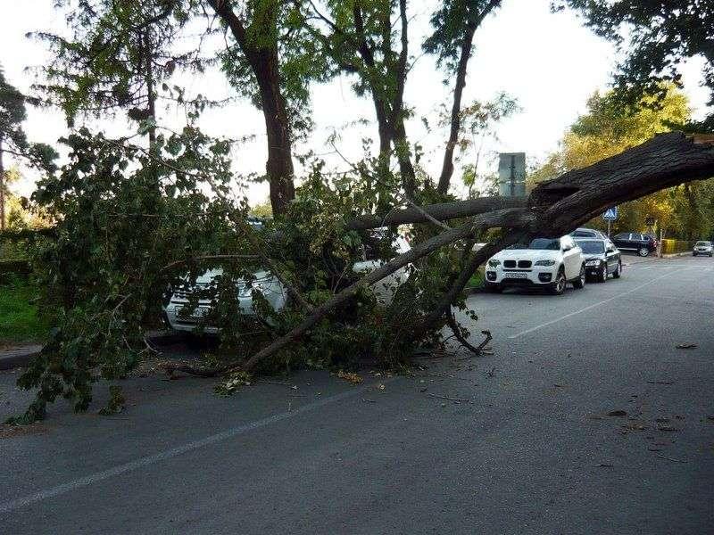 На ул. Чуйкова на автомобиль упало дерево