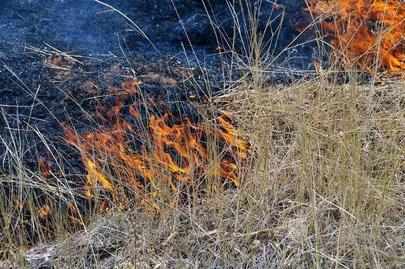 В Волгоградской области ввели режим ЧС из-за сложной пожароопасной обстановки