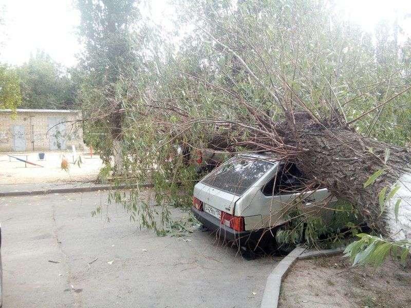 На севере Волгограда на припаркованные у дома машины упало огромное дерево