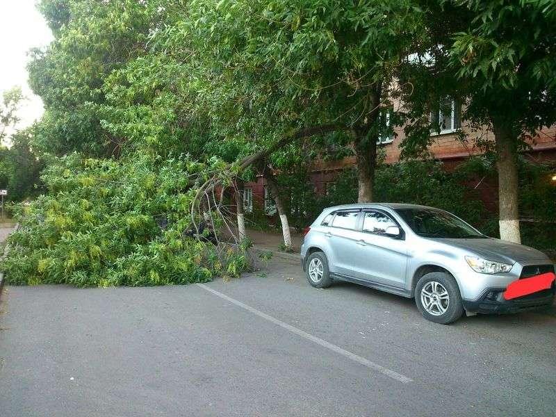 На улице Чуйкова в Волгограде участились падения деревьев