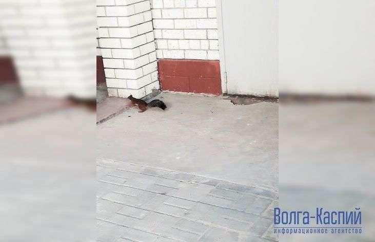 Белки с Мамаева кургана разбрелись по Волгограду