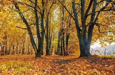 Почему осенью вместе с листьями падает настроение