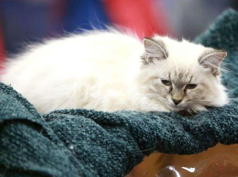 В Госдуме принят законопроект о запрете изъятия домашних животных за долги