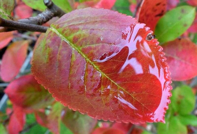 Дожди и похолодание ожидает волгоградцев в начале недели